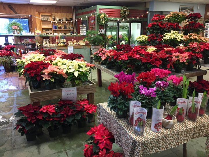 Holiday decorations flowers gifts vees flowers and garden shop holiday decorations flowers gifts negle Gallery